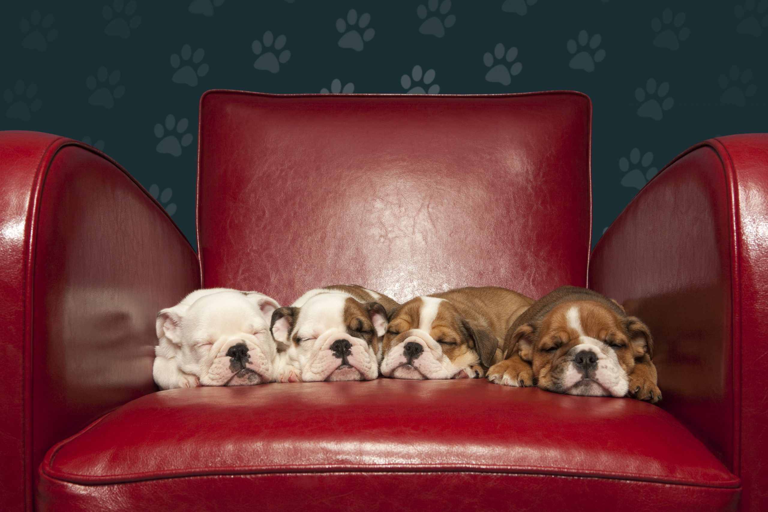 See The Cutest Photos Of Puppies Sleeping Reader S Digest
