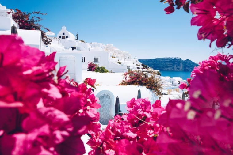 Summer Greece Santorini scenic view landscape punk flower border