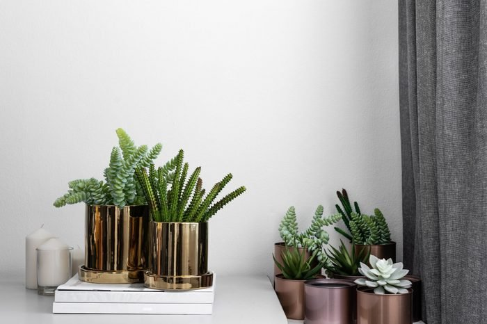 Composition of gold mirror ceramic pots with artificial plants inside setting on minimal books and group of copper aluminium pots in natural light setting scene / cozy interior concept / decoration