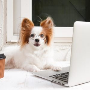 """13 Funny Photos of Dogs """"Working from Home"""""""