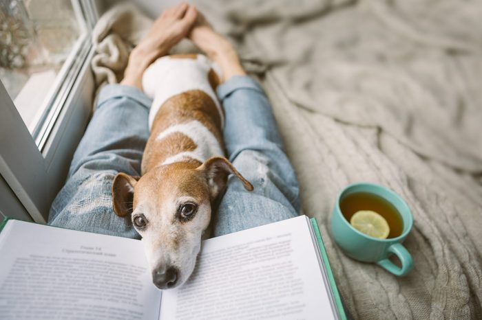 Reading at home with pet. Cozy home weekend with interesting book, dog and hot tea. Beige and blue. Chilling mood