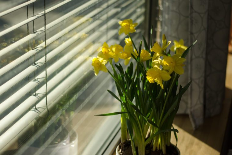 lilies on windowsill
