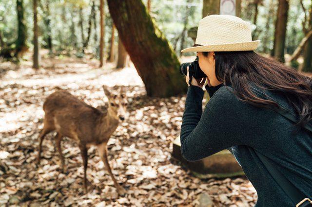 female photographer taking photo of wildlife