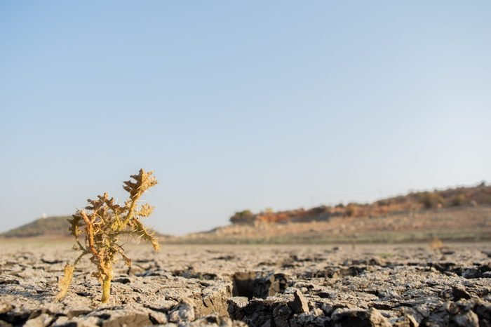 Dead Trees in the a dried up empty reservoir or dam during a summer heatwave, low rainfall and drought in north karnataka,India