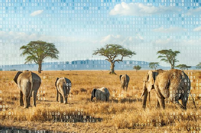 african plains and elephants with computer code overlay