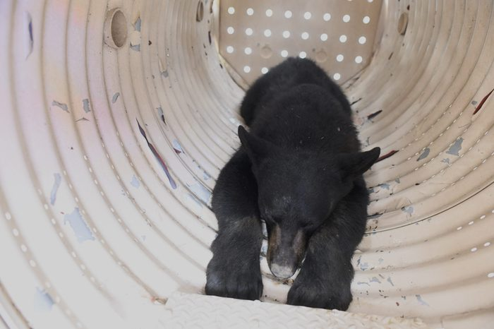 Black Bear Cub On The Loose For 5 Days In Philadelphia Is Captured