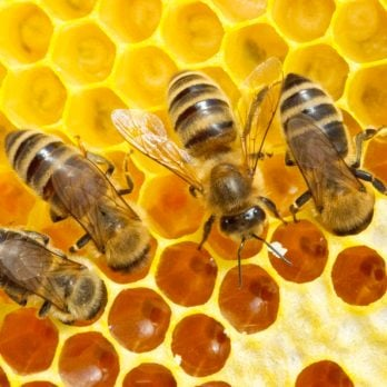 How Ordinary Beehives Could Reverse Our Plastic Waste Disaster