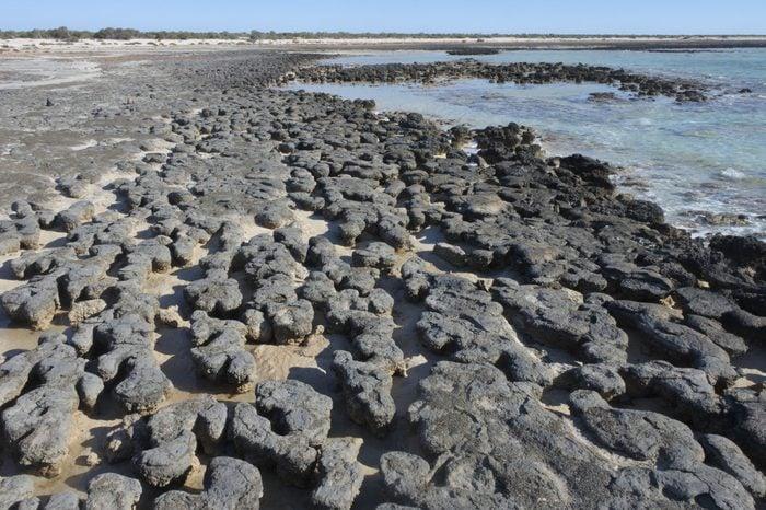 Stromatolites in Shark Bay Western Australia