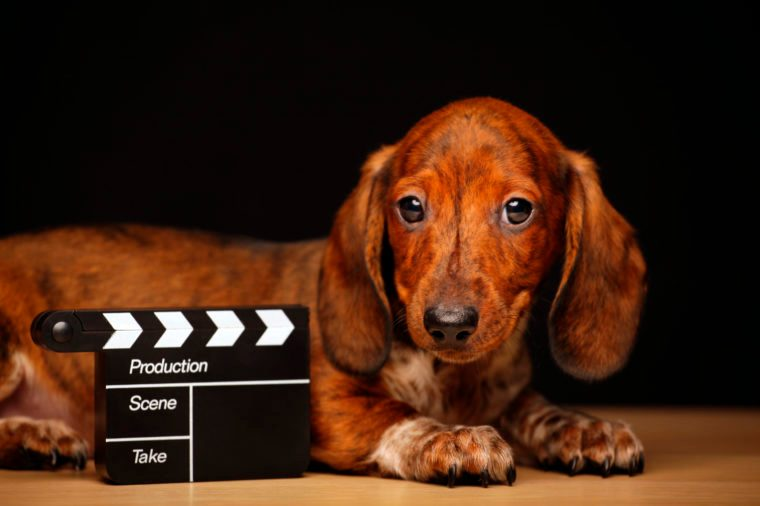 puppy portrait clapper board table