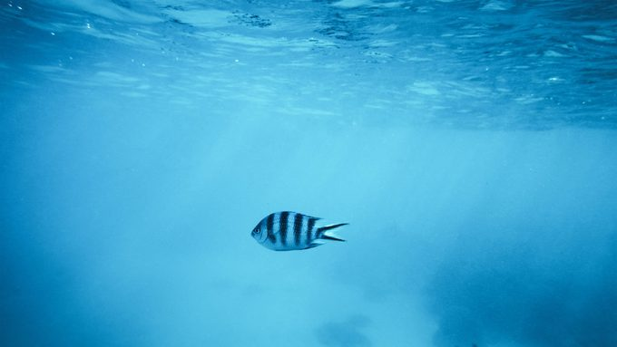 one fish swimming in a sunlit ocean.