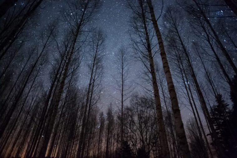 Stars above treetops