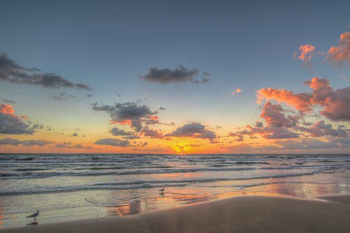Seagulls at sunrise on South Padre Island Texas