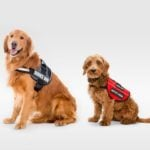 Here's the Difference Between Emotional Support Animals and Service Animals