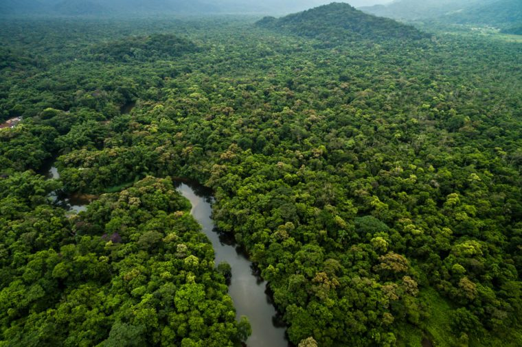 Aerial View of Rainforest in Brazil
