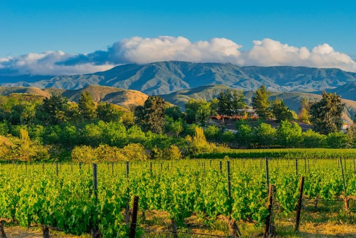 California Vineyard at Dusk with mountains (P)