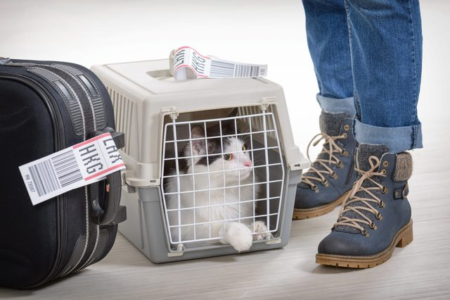 Cat in the airline cargo pet carrier