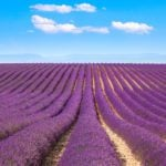 18 of the Dreamiest Lavender Farms Around the World
