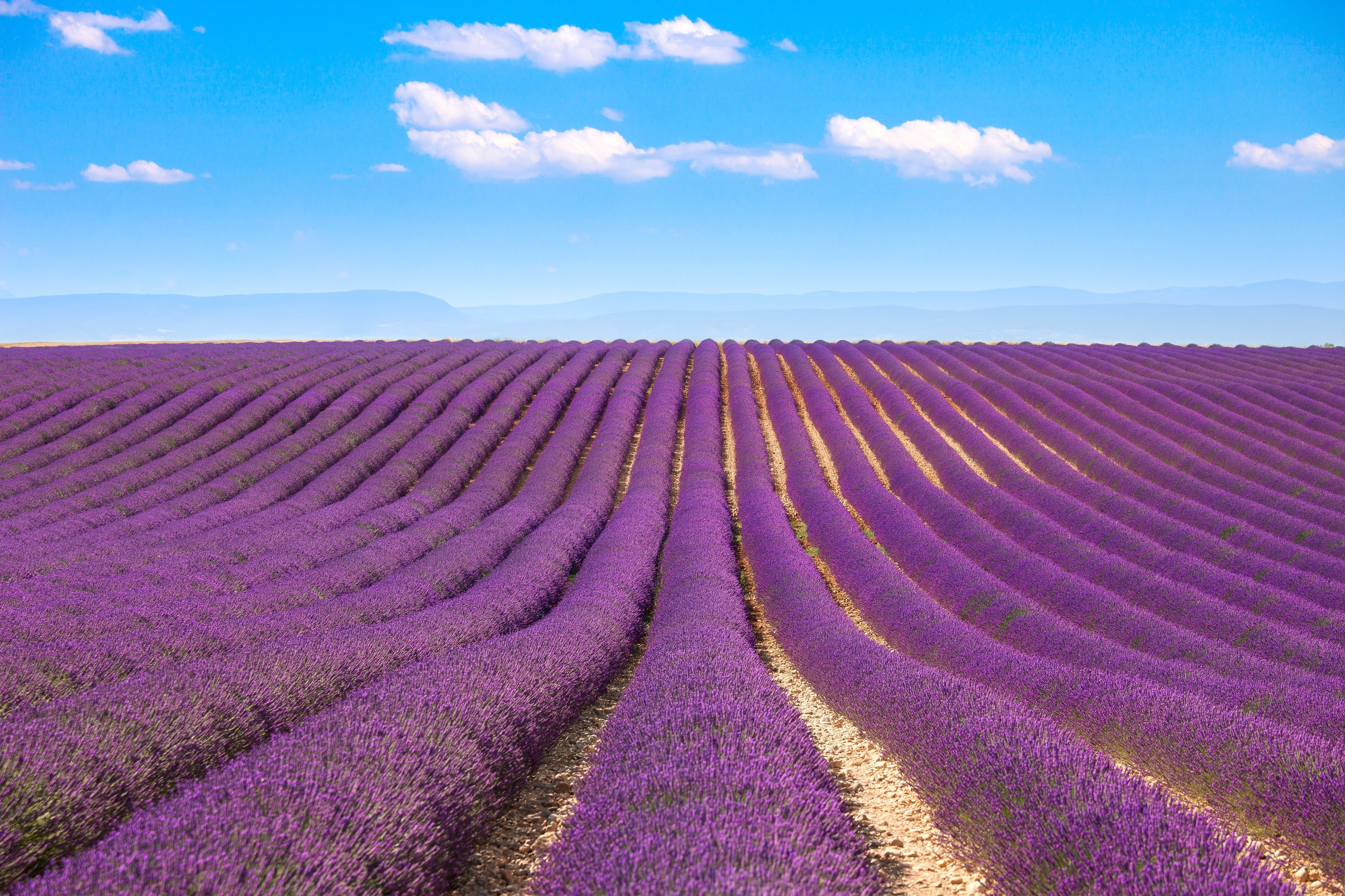 The Dreamiest Lavender Farms Around The World Reader S Digest