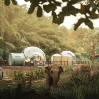I Stayed in a Bubble in the Jungle to Get Closer to Elephants