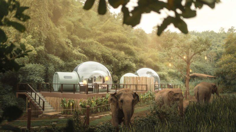 jungle bubble elephants
