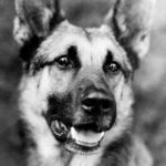 4 Canine Actors That Made More Money Than Humans