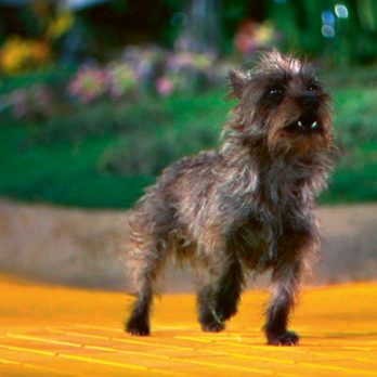 The Most Famous Movie Dog the Decade You Were Born