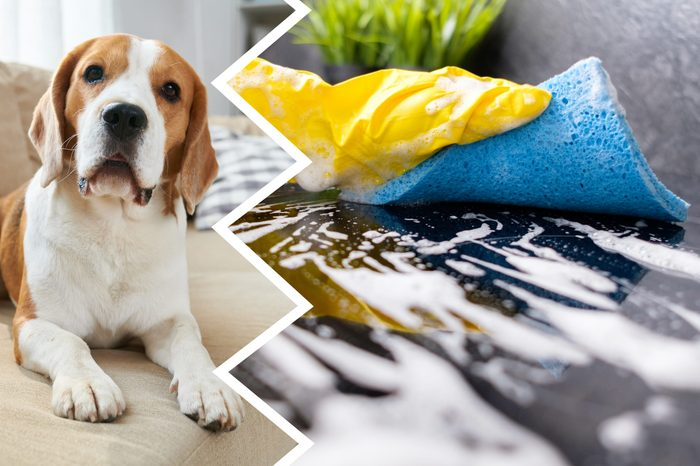 ammonia cleaning products dogs