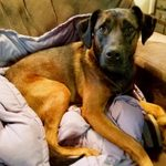 """Her Dog Had Terrible Anxiety Until She Tried a """"ThunderShirt"""""""