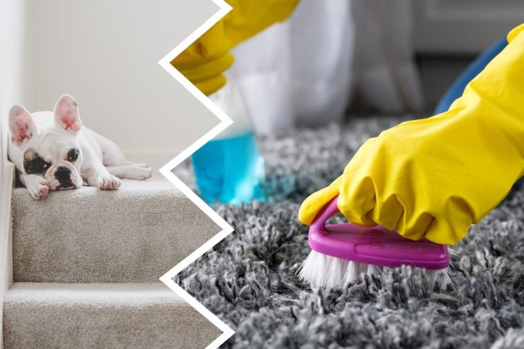 carpet cleaner harmful products dogs