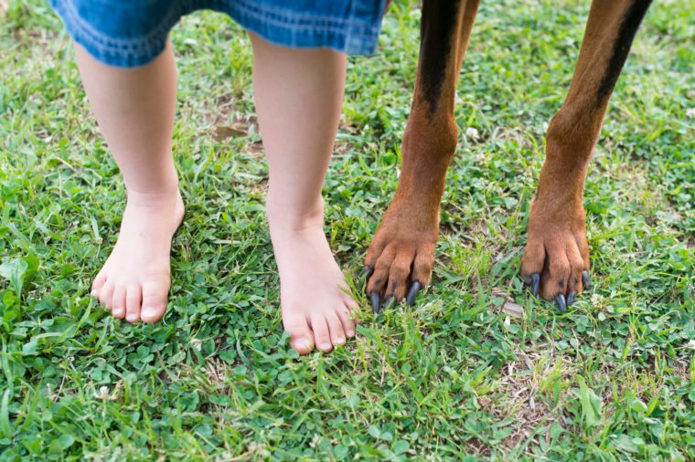 Children's feet and dog's feet