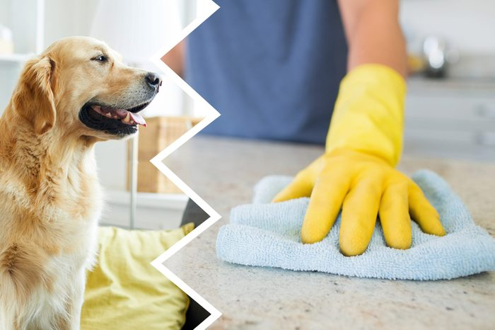 counter cleaner dogs