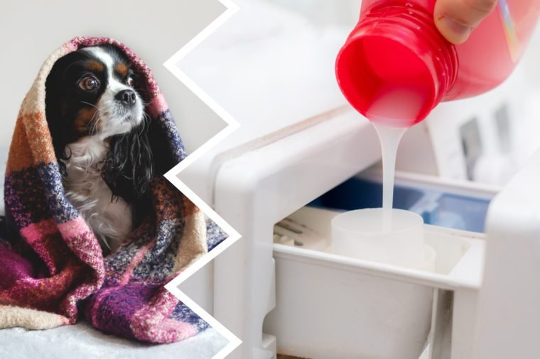 fabric softener dogs cleaning products