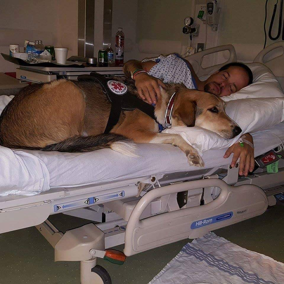 joe meatball mutual rescue pet rescue