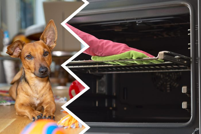 oven cleaner dogs cleaning products