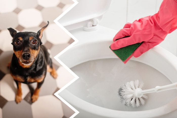 toilet cleaner dogs