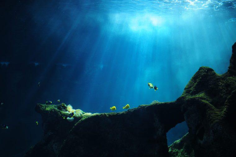 Underwater World - XLarge