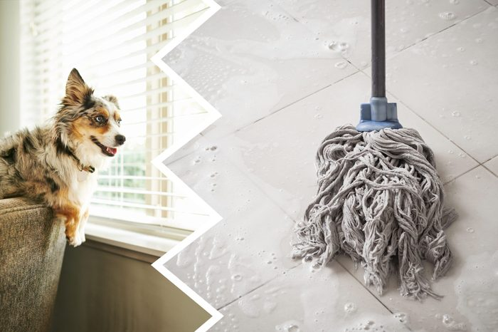 bleach cleaning product dog