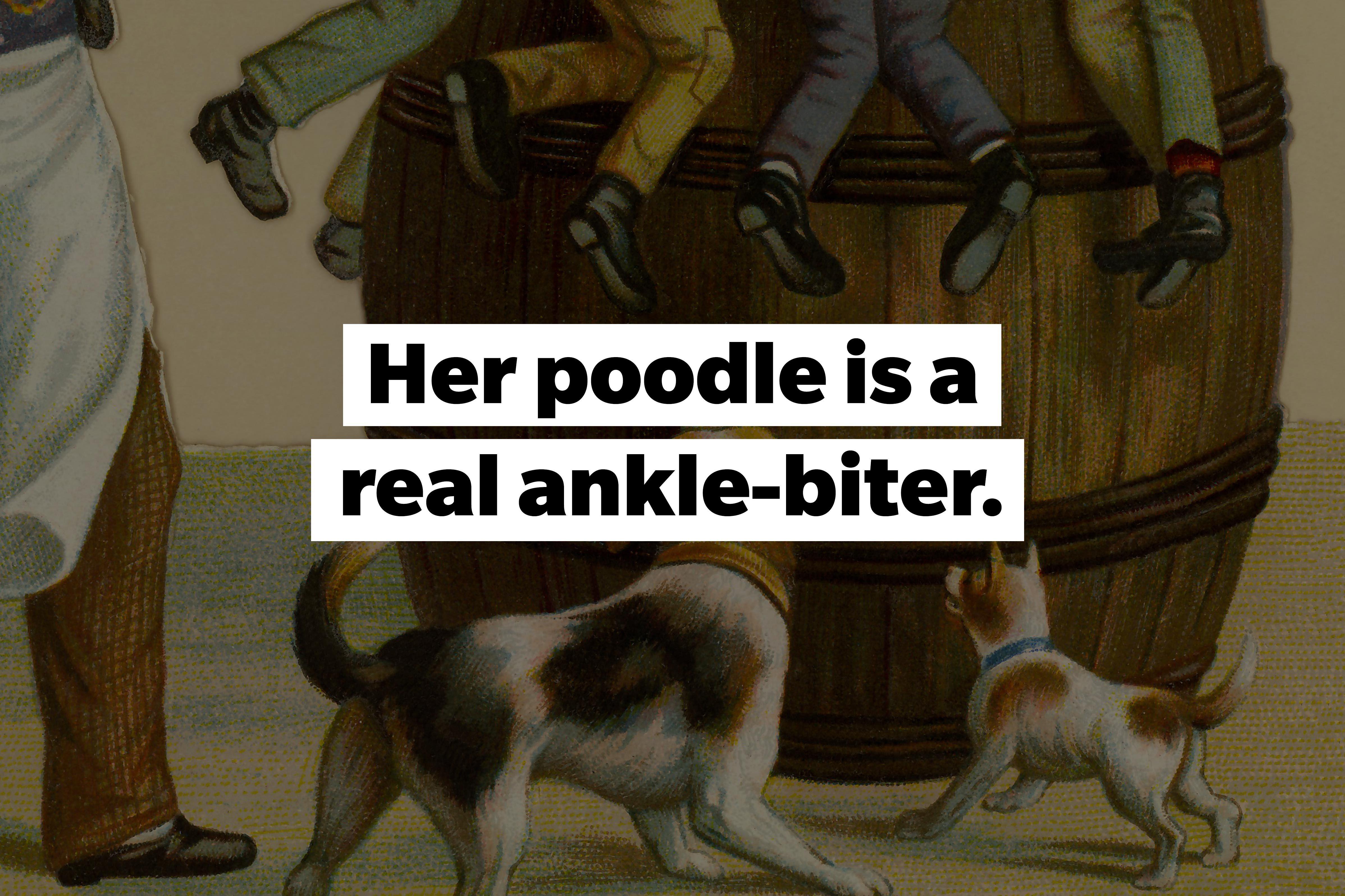 slang words Ankle-biter