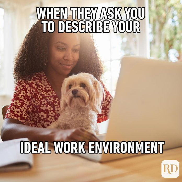 Woman working with a dog on her lap. Meme text: When they ask you to describe your ideal work environment