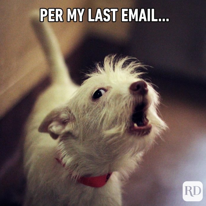 Dog growling. Meme text: PER MY LAST EMAIL…