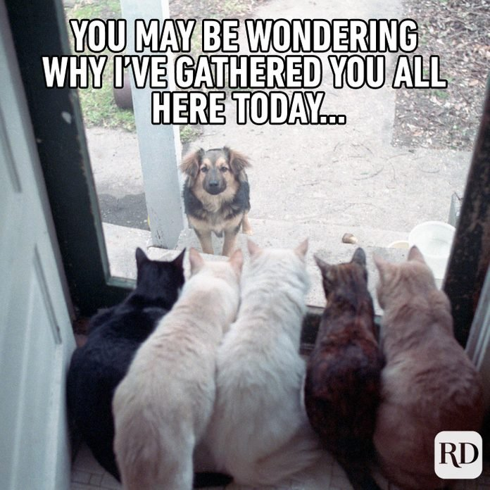 Dog outside door with line of cats before him. Meme text: You may be wondering why I've gathered you all here today…