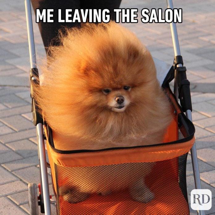 Dog with fluffy hair. Meme text: Me leaving the salon