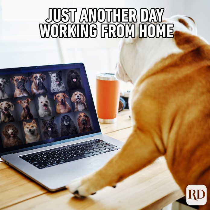 Dog in front of laptop with a bunch of other dogs on it. Meme text: Just another day working from home