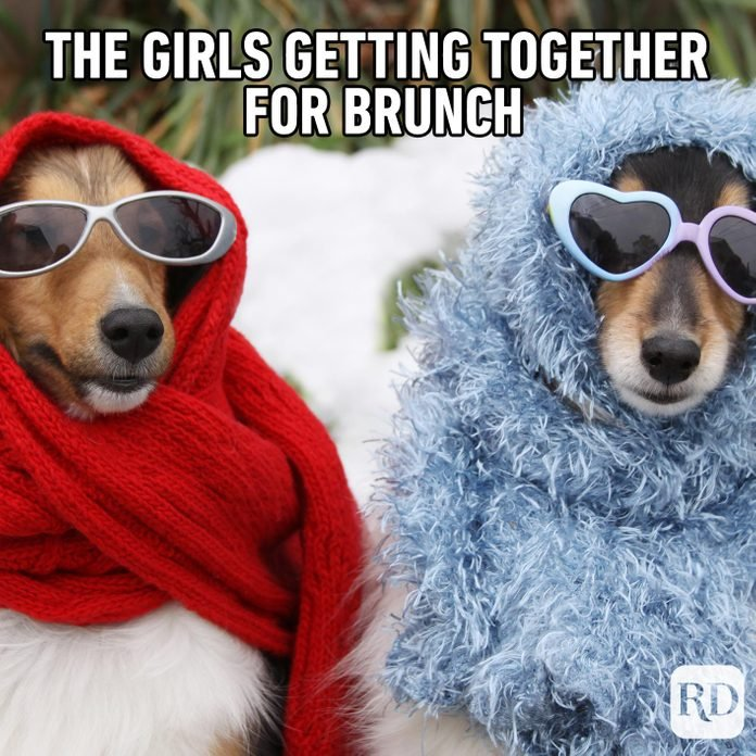 Meme text: The girls getting together for brunch