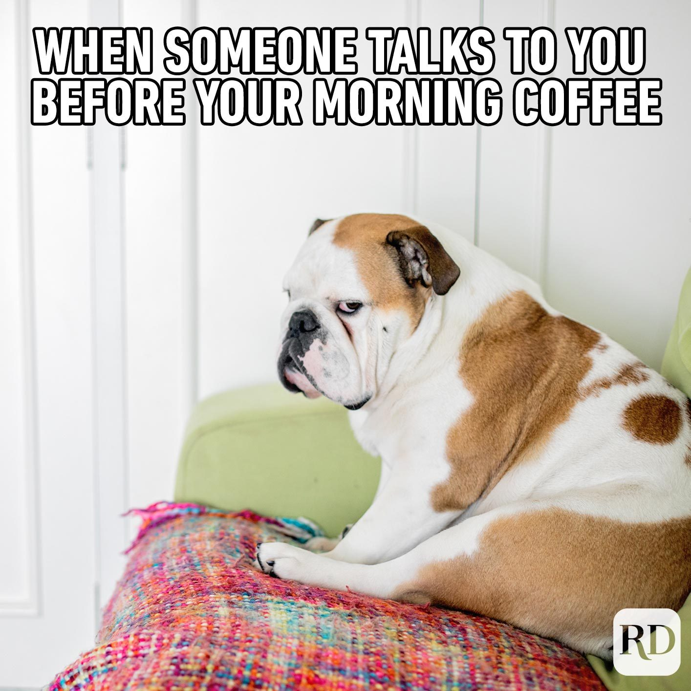 Dog glaring at camera. Meme text: When someone talks to you before your morning coffee
