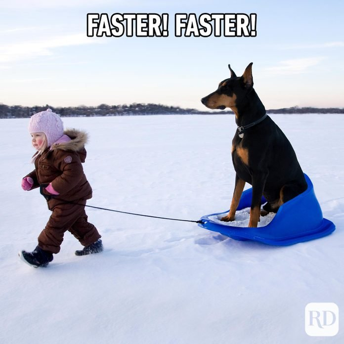 Little girl pulling dog on a sled. Meme text: Faster! Faster!