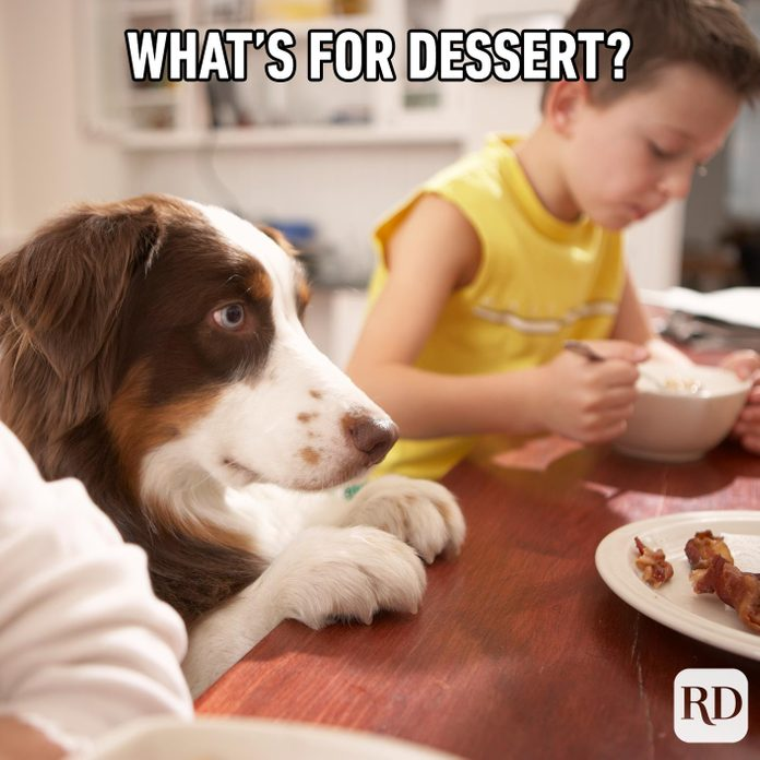 Dog at the dinner table staring at bacon.Meme text: What's for dessert?