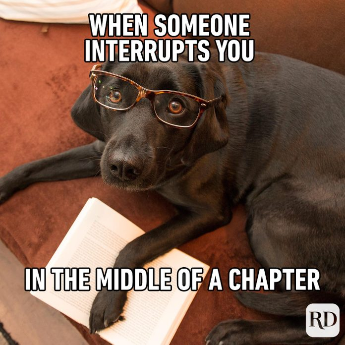 Dog in glasses looking up at camera, holding a book open. Meme text: When someone interrupts you in the middle of a chapter