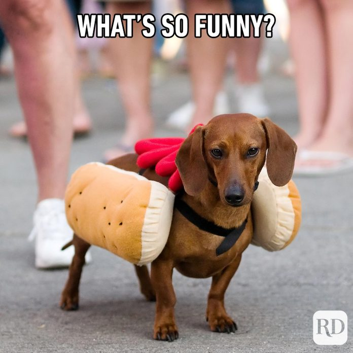Weiner dog in hot dog costume. Meme text: What's so funny?