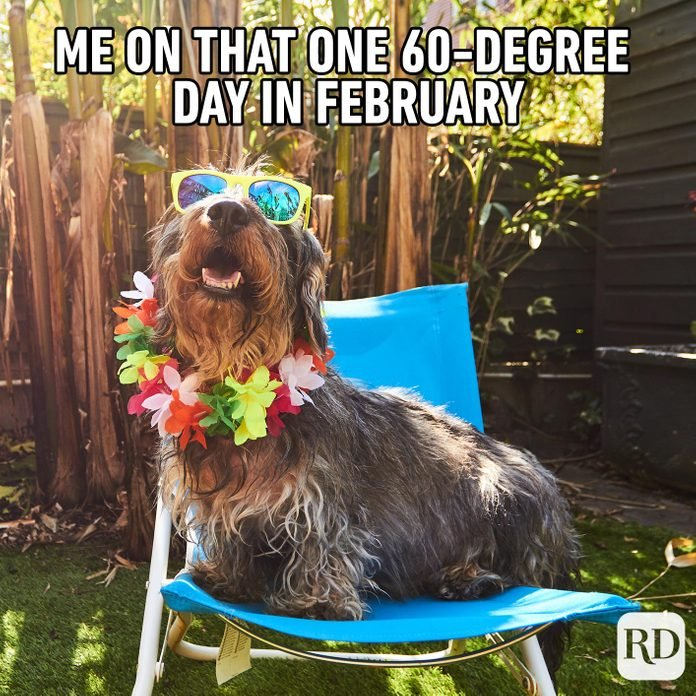Dog sitting on a lawn chair in flower necklace and sunglasses. Meme text: Me on that one 60-degree day in February